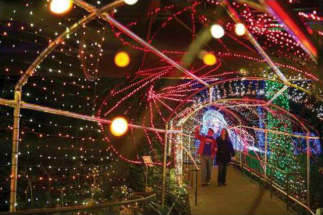 World Of Coca Cola Atlanta Botanical Garden Go All Out For Christmas Forsyth News