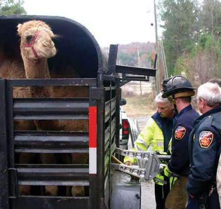 WEBcamel rescue 1 jd