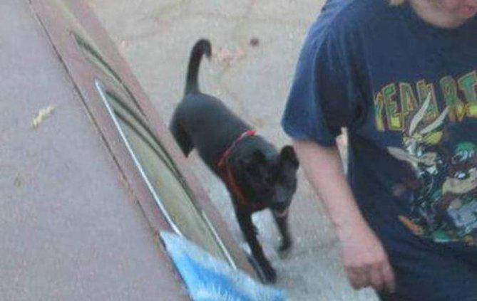 Dog runs away after crash