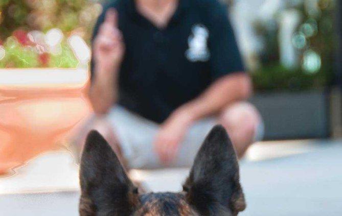 dog training 2 web