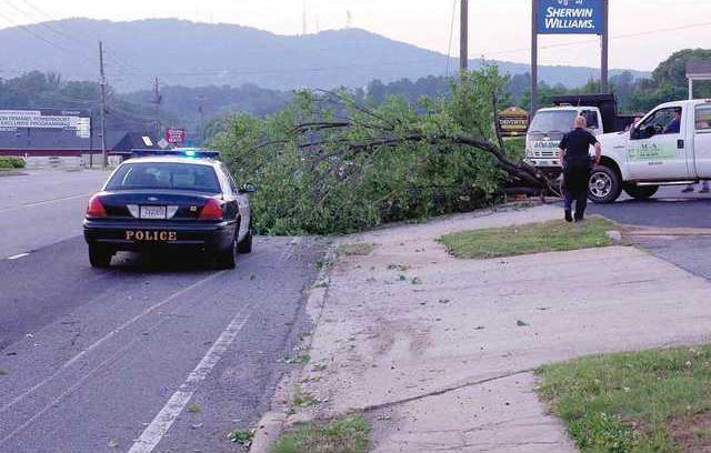 tree down 1 jd
