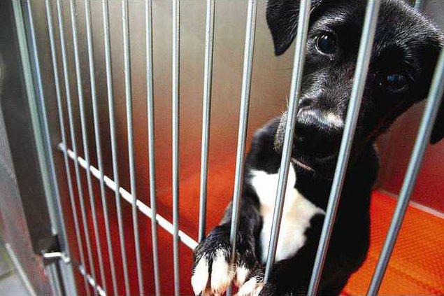 Animal Shelter 4 es