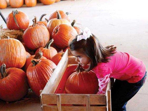 Pumpkin WEB 1