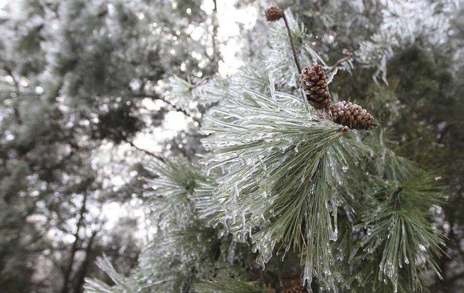 WinterWeather 1