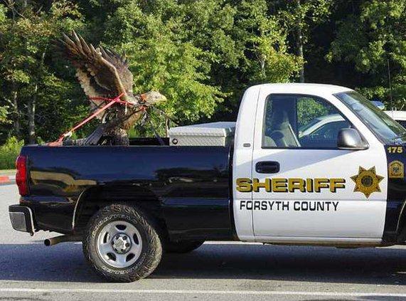 wevb eagle 2