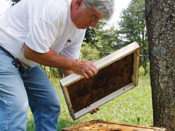 Bees 1 WEB