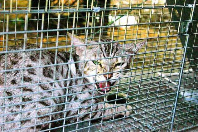Kitty Cat 1 es