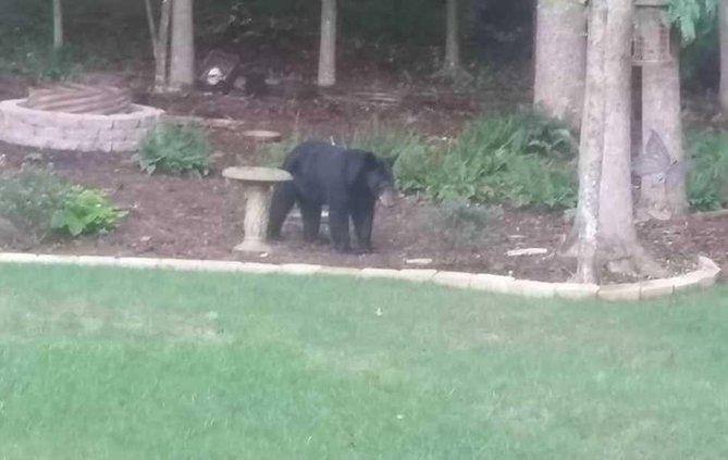 bear 8-22 web
