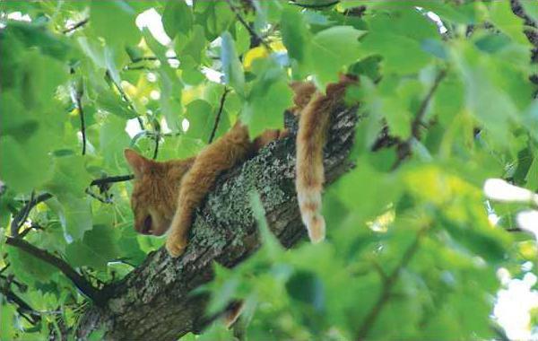 treed kitty 1 jd