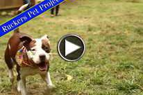 Rucker Pet Project: Kasey The Stafford Terrier