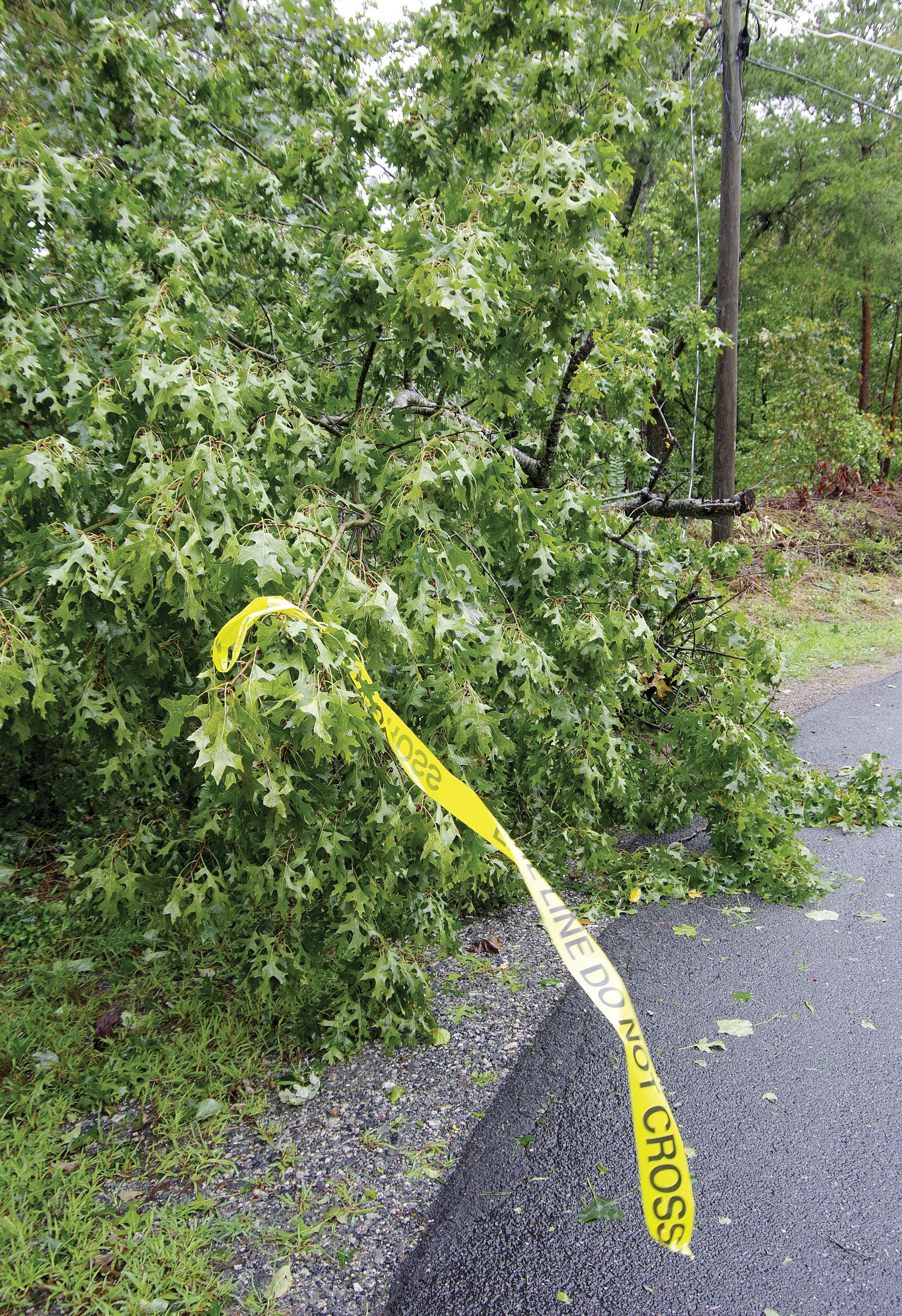 Tree down on Sourwood Drive