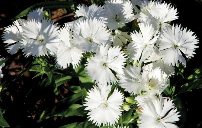 PRINT-Flowers-wide WEB