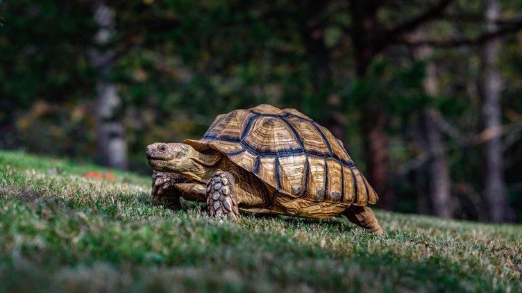 20191106_Tortoises_7_web