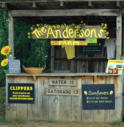 Anderson's sunflower farm