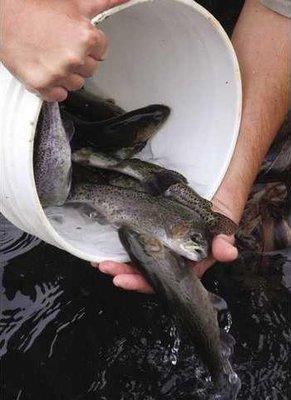 trout hatchery f clo1312D0