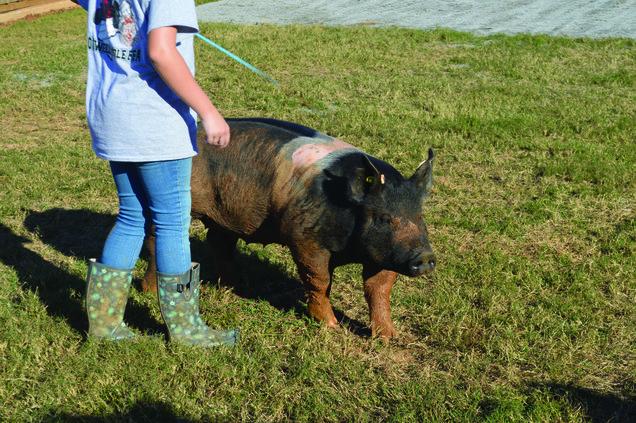 otwell pig