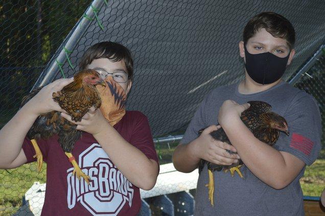otwell chickens