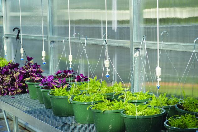 otwell plants