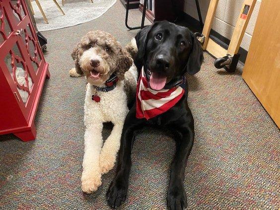 20201124 Lambert Therapy Dogs 3