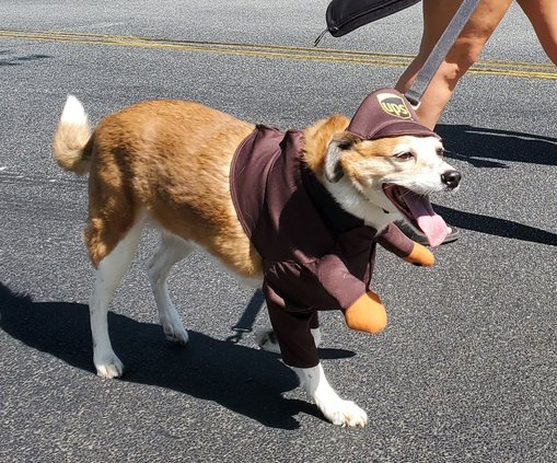 Woof Parade