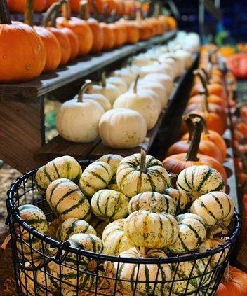 buford corn maze pumpkins
