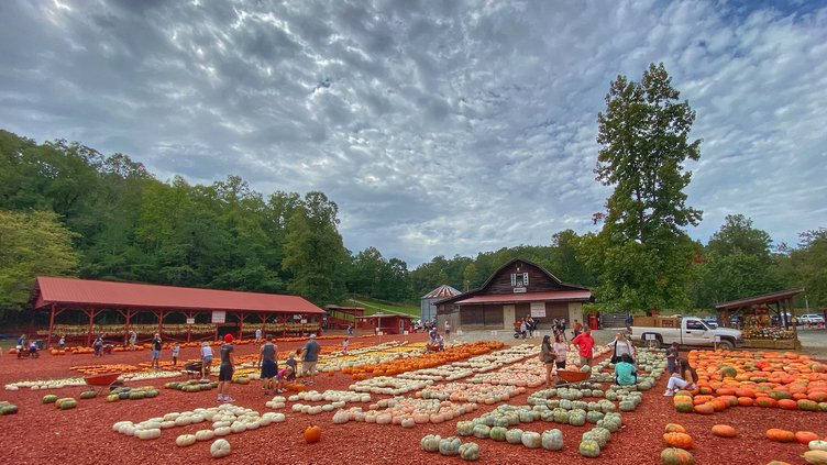 burts pumpkin patch
